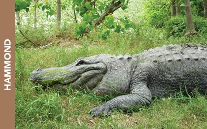 Kliebert & Sons Alligator Tours